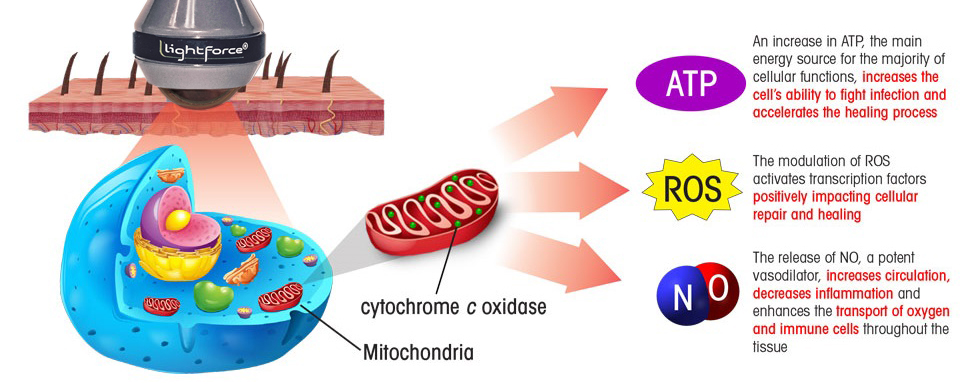 Light hitting Mitochondria and reacting with cytochrome c oxidase